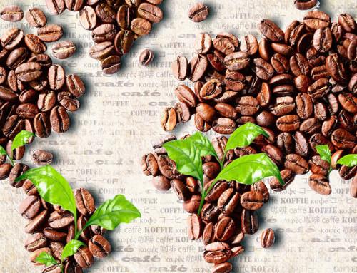 Caffè e sostenibilità: le varietà del futuro